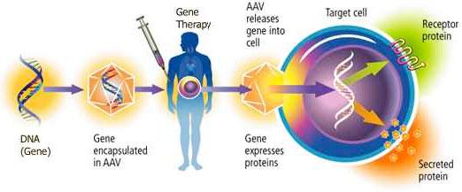 العلاج الجيني لأمراض القلب
